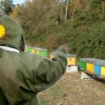 LAZIO: Contributi per gli apicoltori