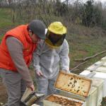 La nutrizione di soccorso delle api, in inverno